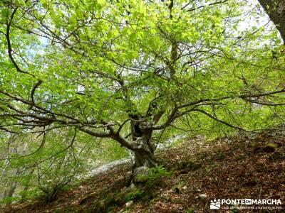 Burgos,Cantabria,Palencia Senderismo; botas de montaña barranquismo pueblos con encanto senderos